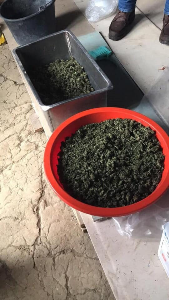 На Прикарпатті поліцейські викрили чоловіка, який вдома зберігав марихуану, фото-2