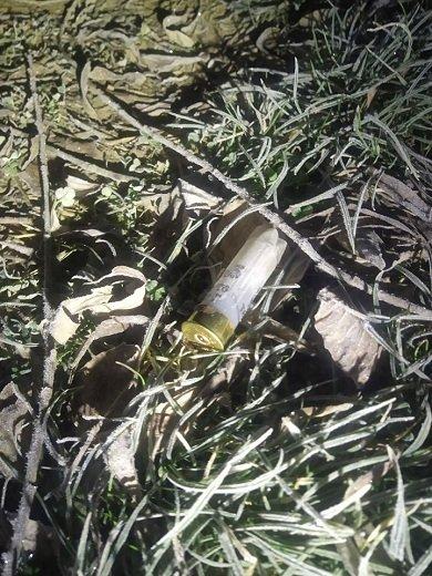 На Прикарпатті рибалка з сітками обстріляв рибпатруль, фото-1