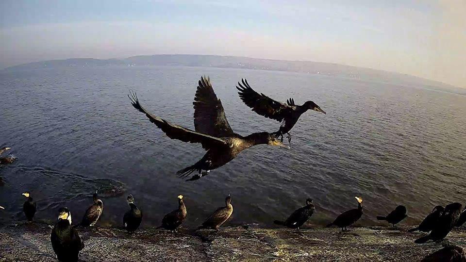 За птахами Галицького природного парку можна спостерігати онлайн, фото-2