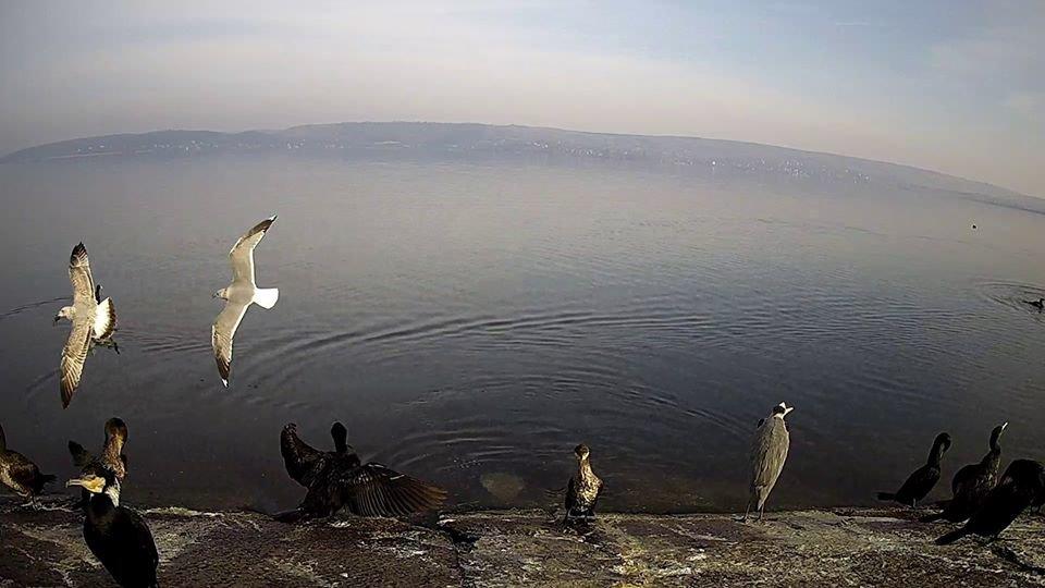 За птахами Галицького природного парку можна спостерігати онлайн, фото-1