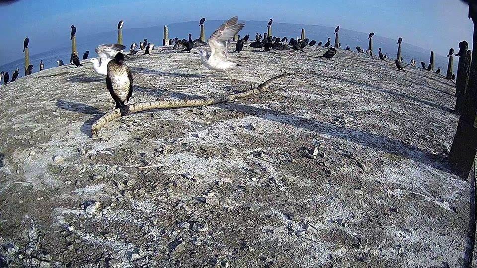 За птахами Галицького природного парку можна спостерігати онлайн, фото-3