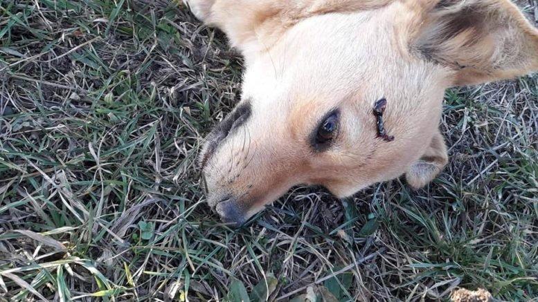 Чоловік, що вчора застрелив собаку на Прикарпатті, робить це не вперше. (фото, відео), фото-1