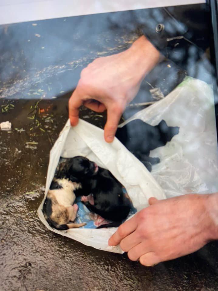 Невідомі в Франківську викинули в смітник цуценят у пакеті з водою. Небайдужі просять свідків відгукнутися (фото), фото-2