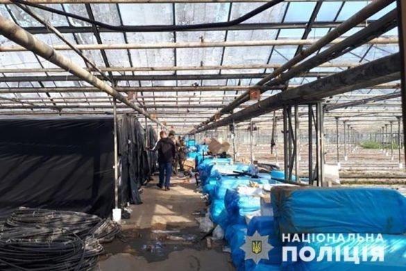 Канабісу на 50 млн євро: на Прикарпатті судитимуть організаторів масштабної нарколабораторії, фото-1