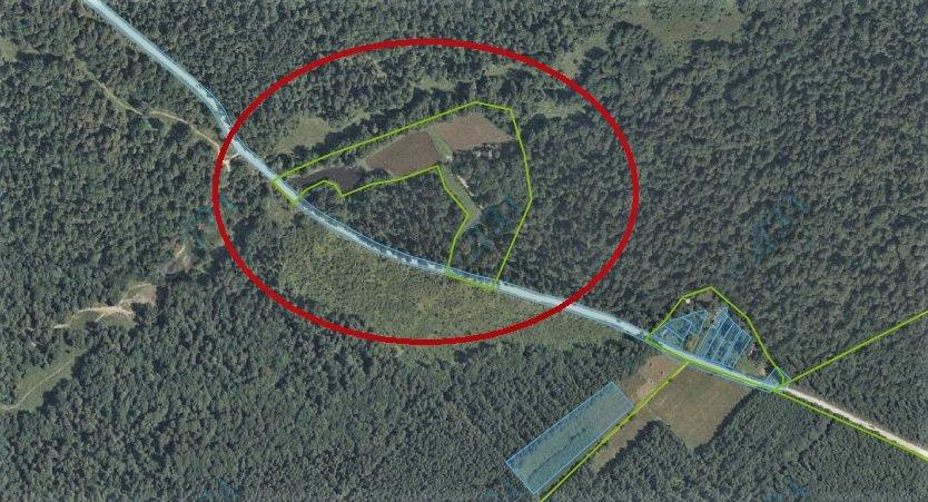 Прокуратура вимагає у Халаменди повернути державну землю у власність лісгоспу (ВІДЕО), фото-1