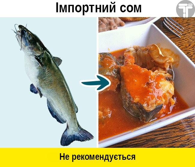 Це потрібно знати. Популярні видів риби, які приносять скоріш шкоду, ніж користь, фото-1