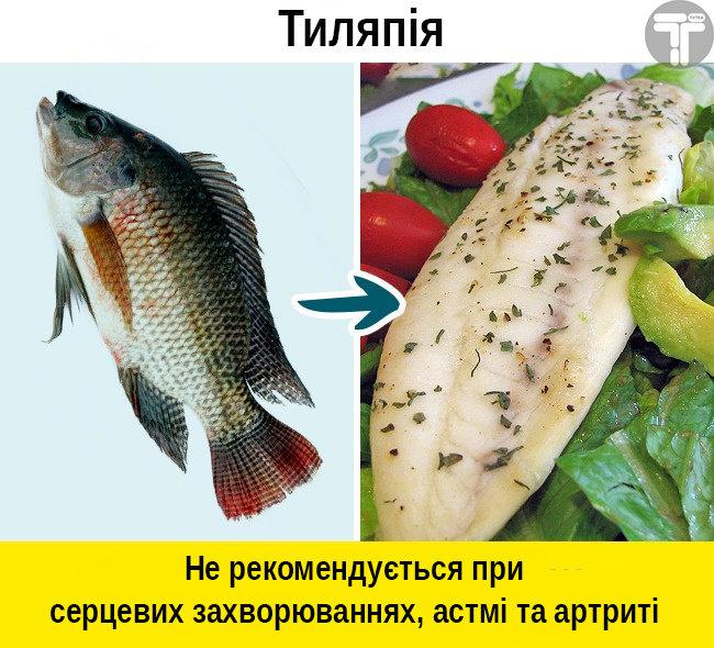 Це потрібно знати. Популярні видів риби, які приносять скоріш шкоду, ніж користь, фото-4