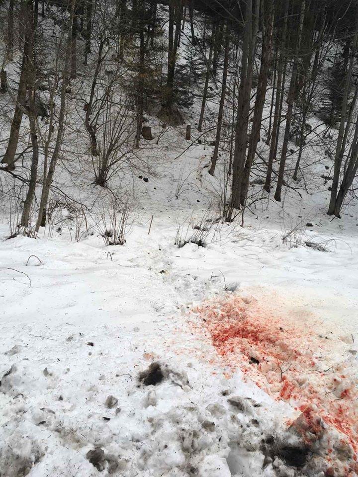На Долинщині невідомі вбили оленя (фото 18+), фото-3