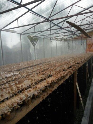 Їстівні равлики. «УхТи Равлик» – друга слимакова ферма на Прикарпатті, фото-1