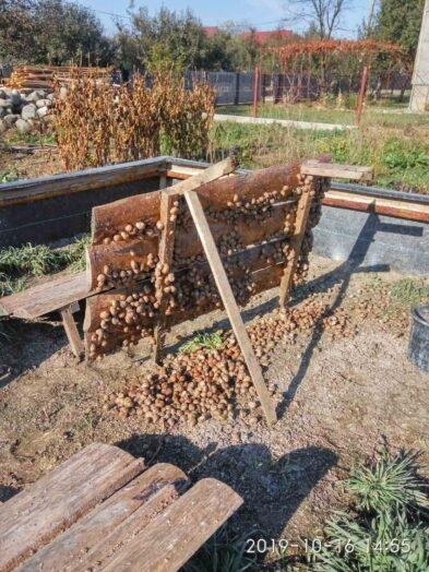 Їстівні равлики. «УхТи Равлик» – друга слимакова ферма на Прикарпатті, фото-5