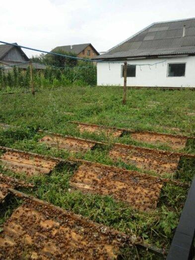 Їстівні равлики. «УхТи Равлик» – друга слимакова ферма на Прикарпатті, фото-6