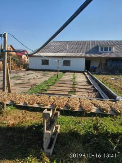Їстівні равлики. «УхТи Равлик» – друга слимакова ферма на Прикарпатті, фото-7