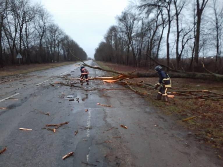 На Прикарпатті порив штормового вітру звалив дерево на проїжджаючий автобус, - ДСНС , фото-1